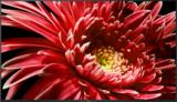 Sony KD-65XG8599 Zwart_